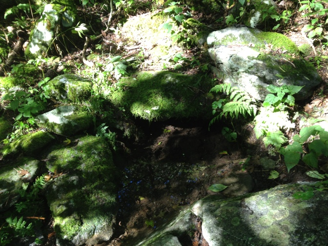 Elderberry Spring - On Licklog Ridge Trail 0.5 mile from Big Frog Mountain.