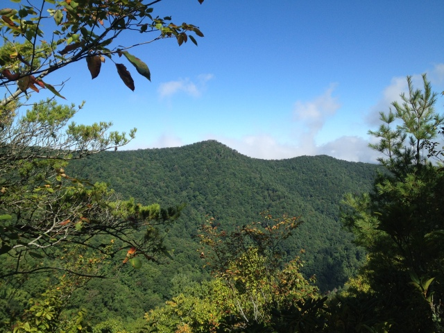 View of Fork Ridge from Licklog Ridge.