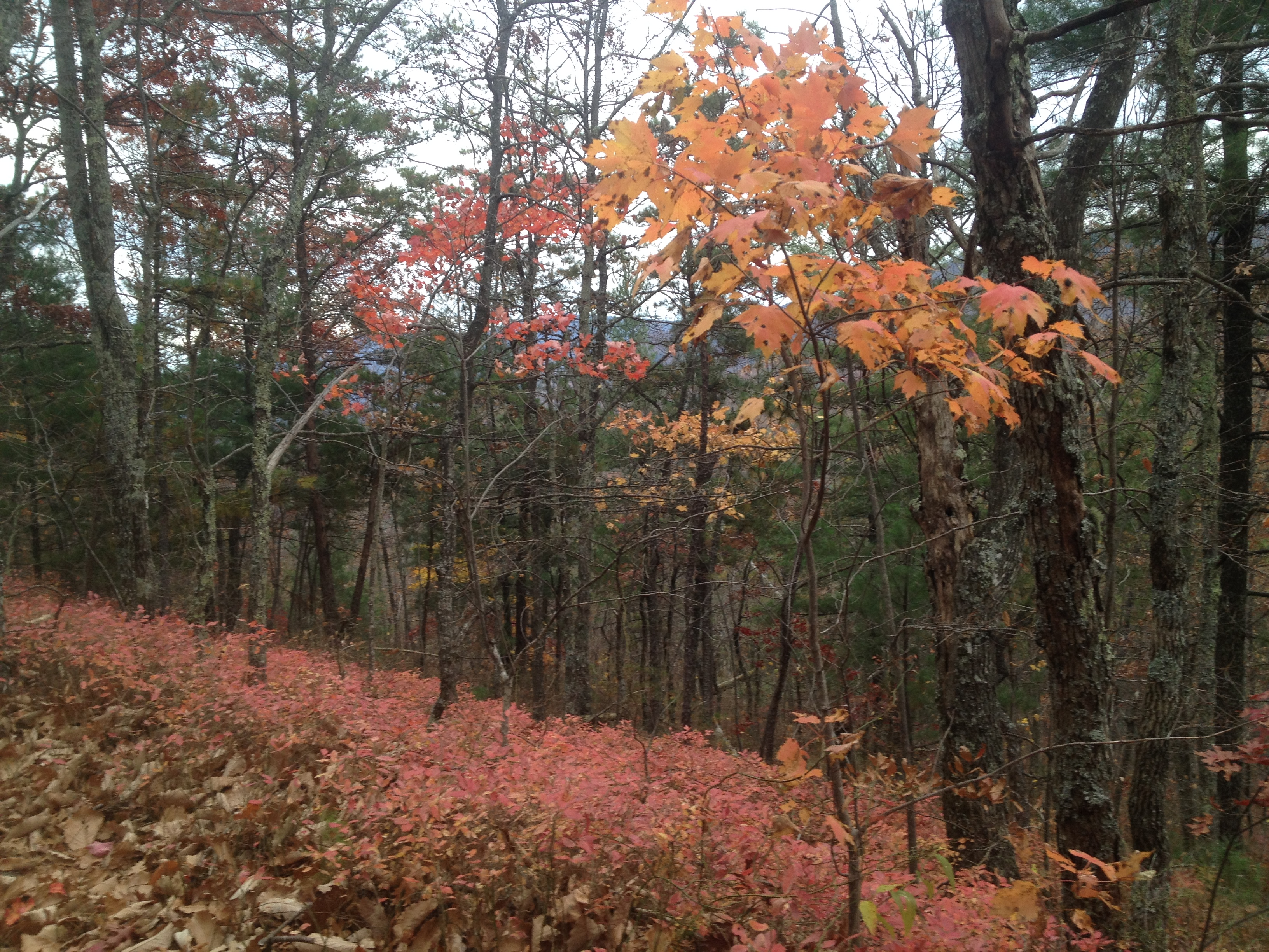 Colors on Hannah Mountain Trail