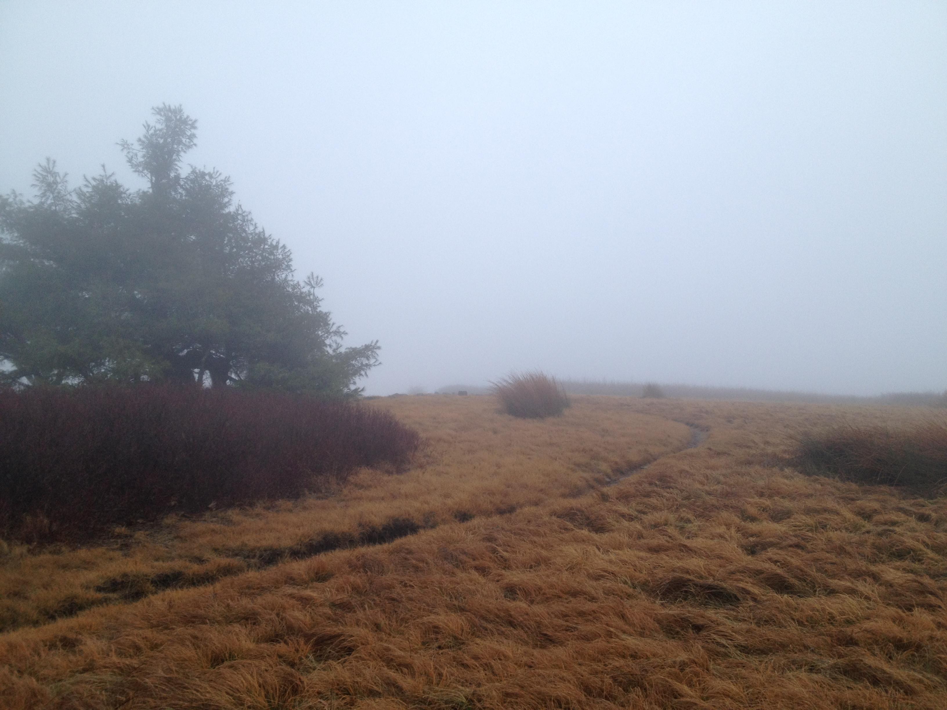Mist shrouded Gregory Bald