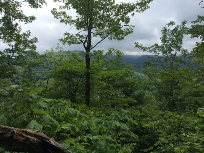 My only views of the day were from Windy Gap Trail.