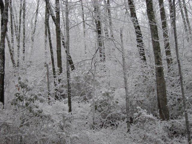 Snow! Twenty Mile Gaining Elevation