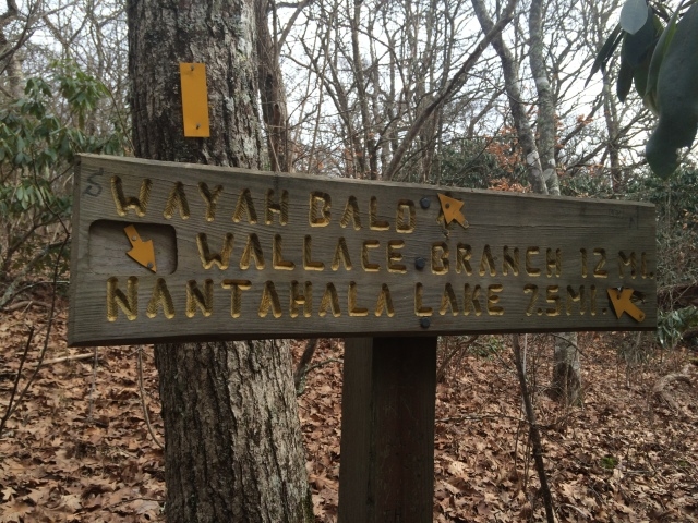 Near top of Wayah Bald. It is 12 miles back to Wallace Branch TH